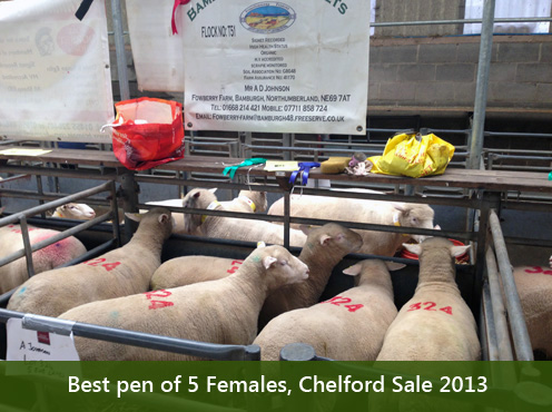 Best pen of 5 Females, Chelford Sale 2013